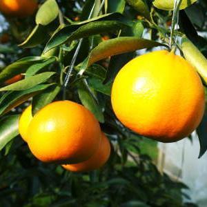 究極の柑橘『せとか』 令和2年の出荷スタート!収穫の様子を現地取材!(番外編)商品ラインナップ紹介!