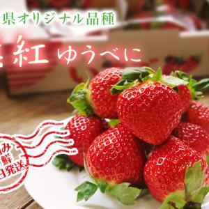 熊本イチゴ『熊紅(ゆうべに)』安全性と美味しさにこだわりぬいた朝採りイチゴを即日発送で大好評販売中!
