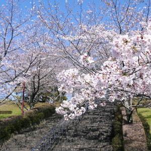 菊池公園、菊池神社の桜photoコレクション 2020