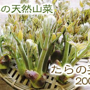 天然たらの芽!令和2年の先行予約の受付をスタートしました!!収穫でき次第ご注文順に随時発送いたします!