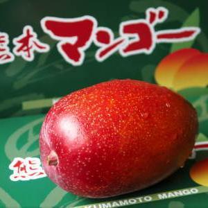 樹上完熟アップルマンゴー お待たせしました!樹上完熟マンゴーのご注文順の発送をスタートしました!
