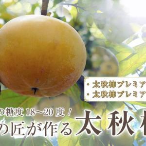 太秋柿 古川果樹園 今年はあの長雨の梅雨の影響がこの時期に出てきてかつてないピンチです!