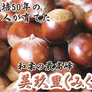 和栗の最高峰『美玖里(みくり)』令和3年の販売スタート!栗栽培歴50年の名人が育て上げました!