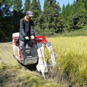 米作りの挑戦(2020) 稲刈りの様子!今年の問題点と来年へむけての課題!(前編)