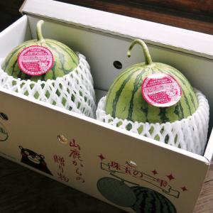 熊本スイカ 小玉スイカ『ピノガール』第1弾は5月上旬より出荷予定!母の日ギフトに最適です!