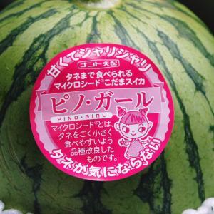 新発売!熊本産マイクロシード小玉スイカ『ピノガール』!令和3年4月27日(火)より出荷スタートです!