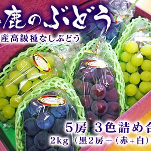 熊本ぶどう 社方園 令和3年度、本日(7/7)初出荷!朝採りの高級種なしぶどうを大好評販売中!