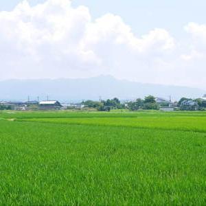熊本県菊池市七城町『砂田のこだわりれんげ米』 成長の様子2021 令和2年度のお米は残りわずかです!