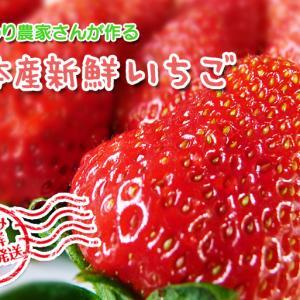 熊本イチゴ『熊紅(ゆうべに)』 美味しさと安全にこだわる朝採りの新鮮イチゴをお届けします!