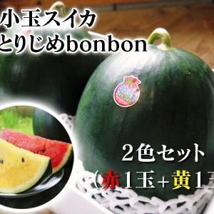 黒小玉スイカ「ひとりじめbonbon」黄色果肉は7月2日出荷分まで!赤果肉、メロンとのコンビも大人気!