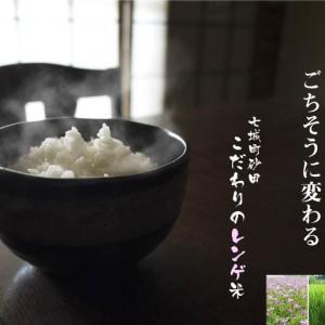 砂田のこだわりれんげ米 田植えの様子(2021)前編 今年も頑固おやじのこだわりの土作りを継承し育てます