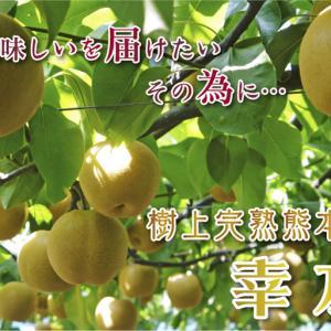 熊本梨 こだわりの樹上完熟梨『幸水』先行予約の受付をスタート!令和3年の初回出荷は7月30日(金)です!