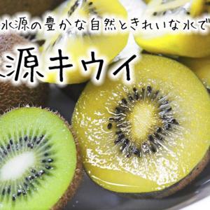 今年も完全無農薬で育てる熊本県菊池市産『水源キウイ』元気に成長中(2021)キウイは冬のフルーツです