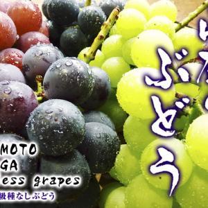 熊本ぶどう 社方園 高級種なしぶどうを大好評販売中!令和2年の社方園の「ぶどう祭り」は中止です!