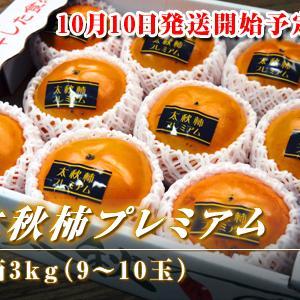 令和元年度の『太秋柿プレミアム』は10月10日から出荷予定!!ただし販売スタートは少々お待ちください