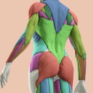筋肉反応が面白い、アクセスボディプロセスは?