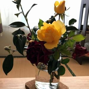 つるバラ剪定・誘引講習会 ご参加ありがとうございいました(*^^*)
