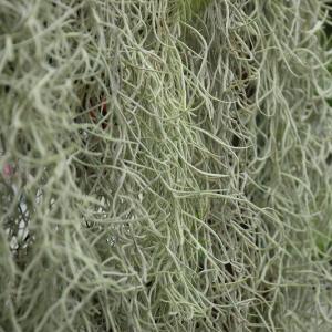 ユニークな食虫植物!!