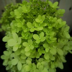 観葉植物の似合う季節
