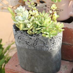 フィロデンドロン・シルバーメタル 美しい観葉植物♪