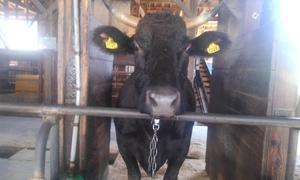 牛の種類~和牛編~