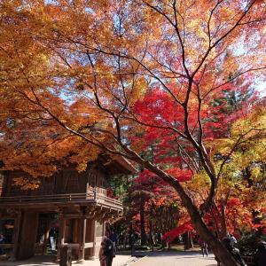 紅葉 in 平林寺(埼玉県新座市)