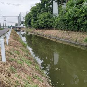 小鮒・鯉っ子釣り in 南畑大排水路