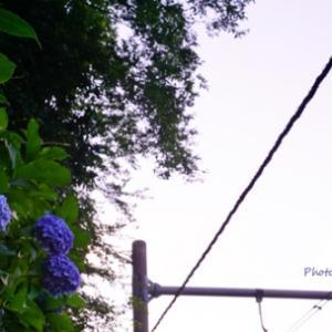 空と紫陽花 by 空倶楽部