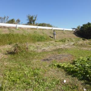 北斜面の草刈