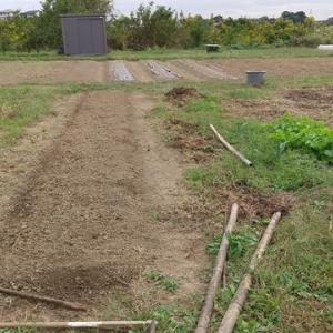 地産ニンニク2畝目植え付け
