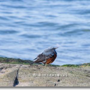 海色した鳥は