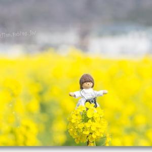 夢ちゃんのカメラ日和  ☆  菜の花畑でほほえんで♪