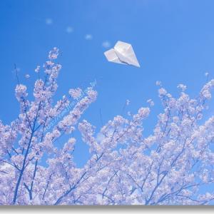私の桜 2020