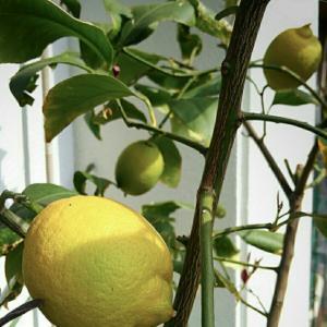 『収穫野菜でうちカフェ♪』 おうちごはん No.346