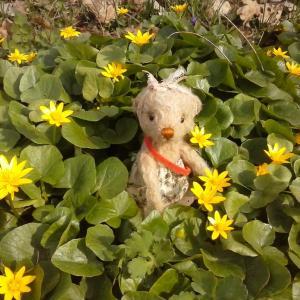 春の草花たちウクライナ