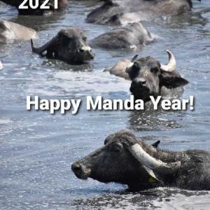 マンダ年の幕開けに