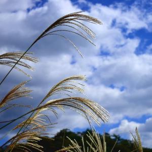 「知って得する季語」秋の風イロイロ