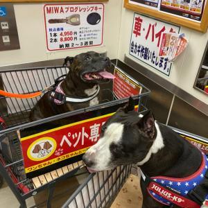 お買い物〜