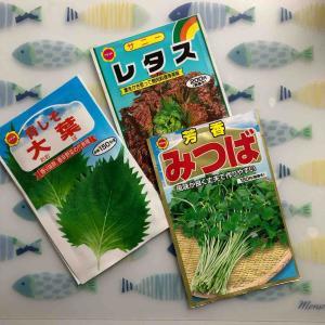 【日常】野菜の水耕栽培を始めました