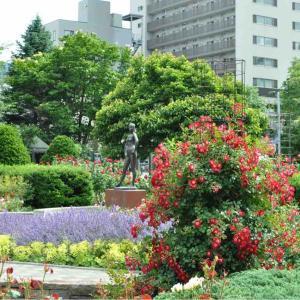 【写真】2020.6.30札幌・大通り公園のバラ