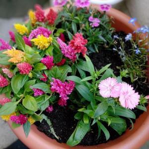 お花の寄せ植え