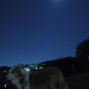 月が綺麗でした