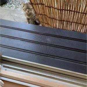 ねこねこネットワークから派遣されたキジトラ仔猫ちゃん。