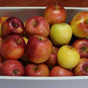 リンゴ(林檎) ~タイヤ交換~