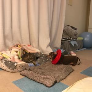 悩み と 滋賀県で猫SOS❕