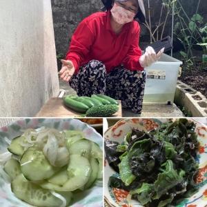 収穫野菜で美味しいディナー♪