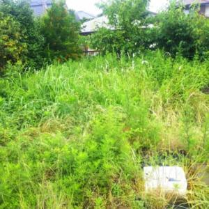 ジャングルの草刈り😅❗️❗️