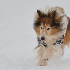 ドックフィールドMAIKOで雪遊び