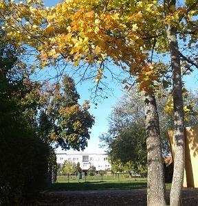 秋晴れの公園にて