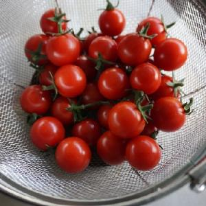 ミニトマト豊作の年